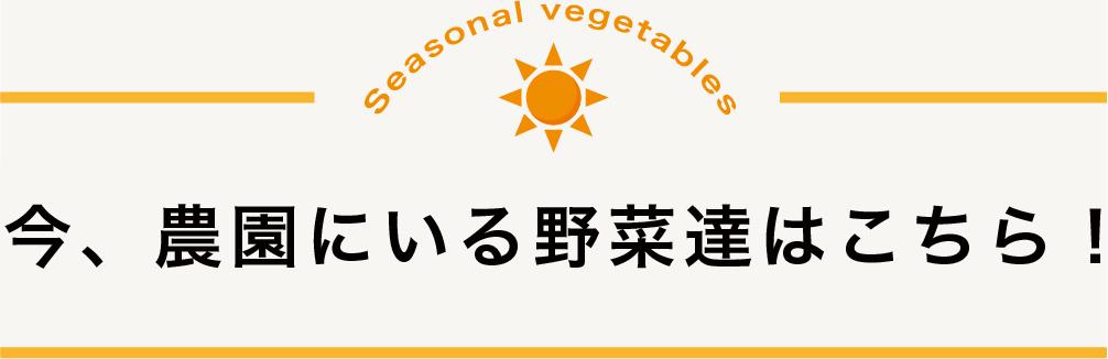 今、農園にいる野菜たちはこちら!